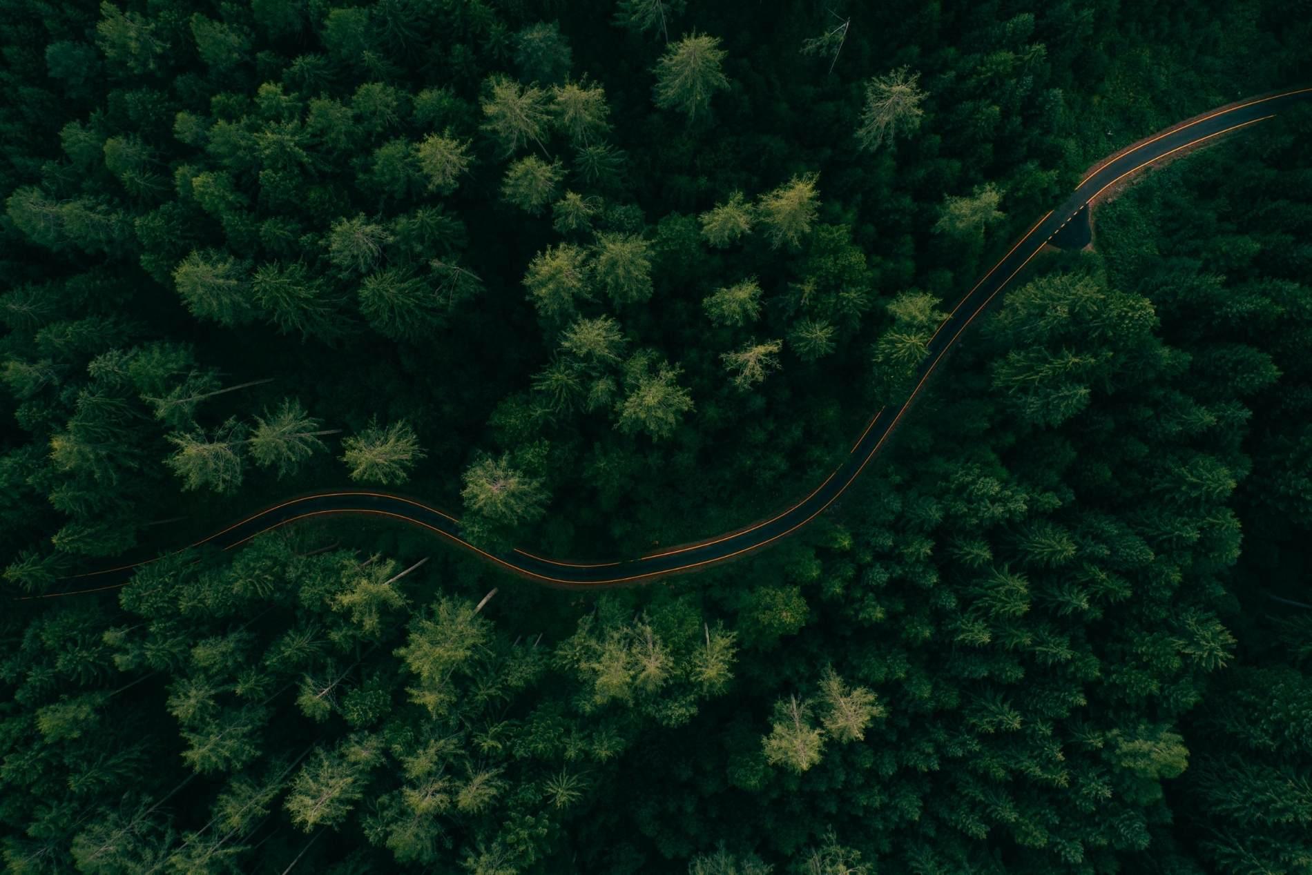 Reforestamos el bosque lemonte